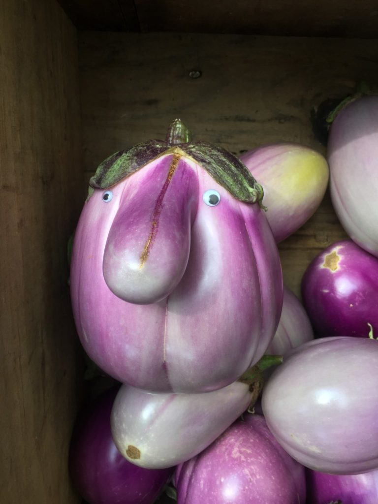 Mr. Eggplant Head, spotted at Deering Oaks Farmer's Market, Portland Maine.
